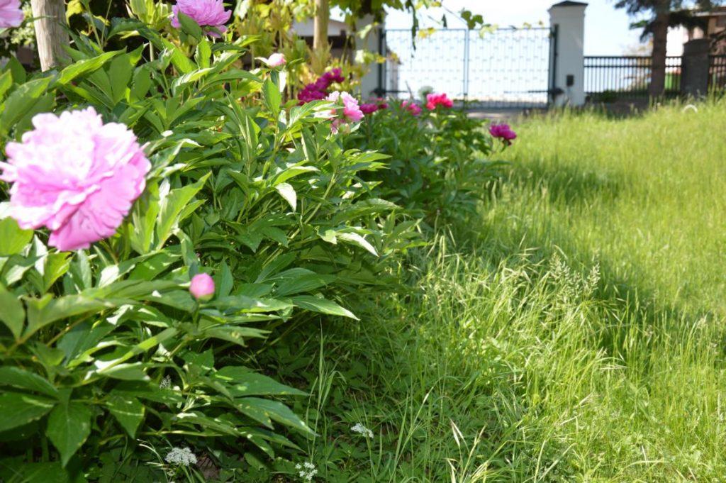 Garten und Baumarkt in Österreich