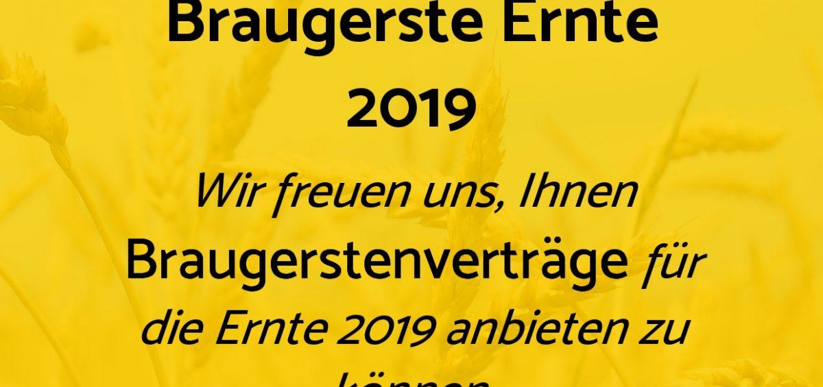 Braugerste Ernte 2019